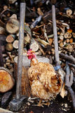 Chicken outdoor Royalty Free Stock Images