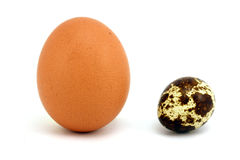 Chicken and quail egg upright. On a white background Royalty Free Stock Photo