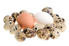 Chicken and quail eggs. Stock Photo