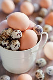 Chicken and quail eggs. In a metal bucket, selective focus Stock Image