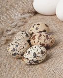 Chicken and quail eggs Stock Images