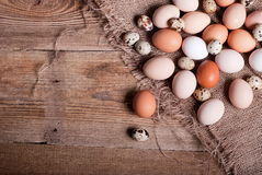 Chicken and quail eggs ab Stock Image