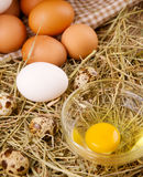 Chicken and quail eggs. On the background of hay Stock Image