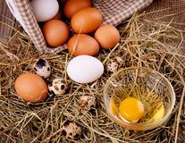 Chicken and quail eggs Royalty Free Stock Photo