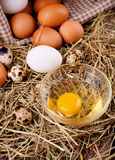 Chicken and quail eggs Royalty Free Stock Photography