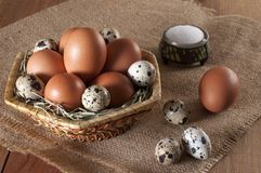 Chicken and quail eggs in basket and on sackcloth. Near salt in saltshaker. Large brown chicken eggs and small motley quail eggs on straw in wicker basket. Near stock photography