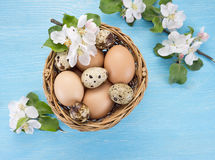 Chicken and quail eggs in the basket and spring flowers Stock Photos