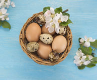 Chicken and quail eggs in the basket and spring flowers Stock Image