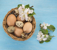 Chicken and quail eggs in the basket and spring flowers on blue wooden background. Easter concept Stock Photo