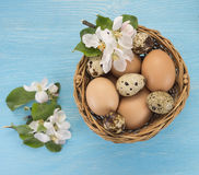 Chicken and quail eggs in the basket and spring flowers on blue. Wooden background. Easter concept Royalty Free Stock Photos