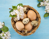 Chicken and quail eggs in the basket and spring flowers Stock Photography