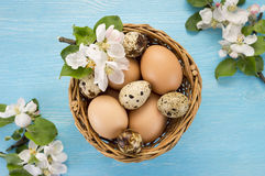 Chicken and quail eggs in the basket and spring flowers. On blue wooden background. Easter concept Royalty Free Stock Photos