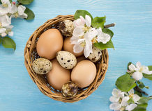 Chicken and quail eggs in the basket and spring flowers. On blue wooden background. Easter concept Royalty Free Stock Images