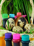 Chicken and quail eggs in a basket surrounded by food colourings. Prepared to colour the eggs Stock Photo