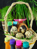 Chicken and quail eggs in a basket surrounded by food colourings. Prepared to colour the eggs Stock Images