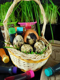 Chicken and quail eggs in a basket surrounded by food colourings. Prepared to colour the eggs Stock Photos