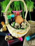 Chicken and quail eggs in a basket surrounded by food colourings. Prepared to colour the eggs Stock Image