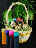 Chicken and quail eggs in a basket surrounded by food colourings. Prepared to colour the egg Stock Photos
