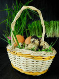 Chicken and quail eggs in a basket. Surrounded by fresh grass Royalty Free Stock Photography