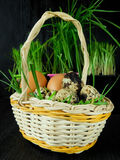 Chicken and quail eggs in a basket. Surrounded by fresh grass Royalty Free Stock Photos