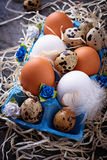 Chicken and quail eggs in carton box, Easter concept Stock Images