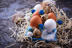 Chicken and quail eggs in carton box, Easter concept Stock Image