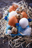 Chicken and quail eggs in carton box, Easter concept Royalty Free Stock Photo