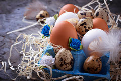 Chicken and quail eggs in carton box, Easter concept Royalty Free Stock Photos