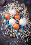 Chicken and quail eggs in carton box, Easter concept Stock Photography