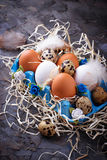Chicken and quail eggs in carton box, Easter concept Royalty Free Stock Images