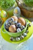 Chicken and quail eggs in colorful porcelain dish and Fresh cress. Easter Stock Images