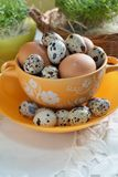 Chicken and quail eggs in colorful porcelain dish and Fresh cress. Easter Royalty Free Stock Photos