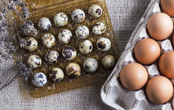 Chicken and quail eggs in containers Royalty Free Stock Image