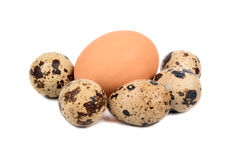 Chicken and quail eggs Stock Image