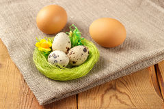 Chicken and quail eggs with a green nest. On burlap and tree Royalty Free Stock Image