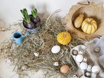 Chicken and quail eggs in packaging, pumpkins, hay, growing hyacinths, Easter concept, holiday preparation, harvest, seasonal holi. Days, village, farm stock images