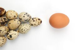 Chicken and quail eggs on white background Stock Photos