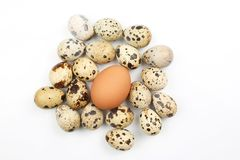 Chicken and quail eggs on white background Royalty Free Stock Photography