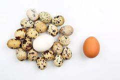 Chicken and quail eggs on white background Royalty Free Stock Image
