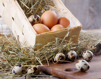 Chicken and quail eggs Royalty Free Stock Images