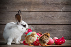 Chicken and rabbit with Easter eggs. On wooden background Royalty Free Stock Photography