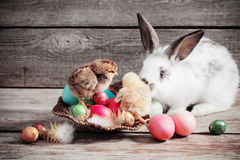 Chicken and rabbit with Easter eggs Stock Photos