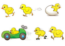Chicken race. Cartoon style chickens racing a round Stock Image