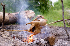 Chicken Roasting Over Open Camp Fire Stock Image