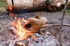 Chicken Roasting Over Open Camp Fire Royalty Free Stock Photo