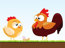 A Chicken And A Rooster Stock Photos