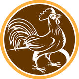 Chicken Rooster Side Circle Woodcut Stock Photos