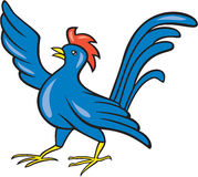 Chicken Rooster Wing Pointing Cartoon Royalty Free Stock Images