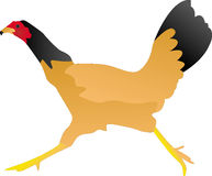 Chicken running Royalty Free Stock Photography