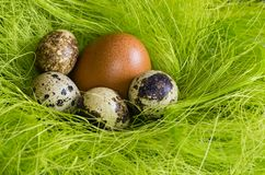 Chicken's and Quail's eggs royalty free stock photo